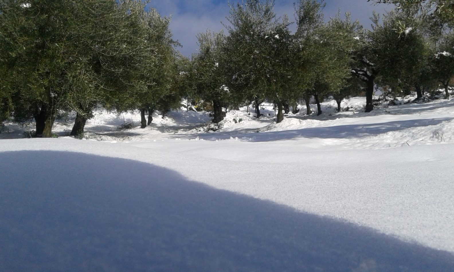 Arriva la neve.